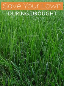 Save Your Lawn During Drought - Grown Ups Magazine - Are water restrictions and drought conditions destroying your lawn?