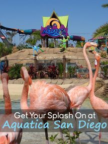 Get Your Splash On at Aquatica San Diego - Grown Ups Magazine - Ready to start the season off with a splash? Find refreshing fun in the sun at Aquatica.